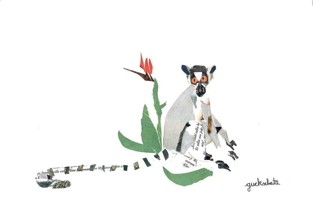 Guckschatz Lemur